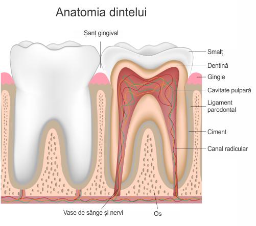 Tratament endodontie cabinet stomatologic sector 2 No Pain